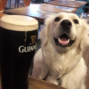 Dog in Pub with a pint of Guinness